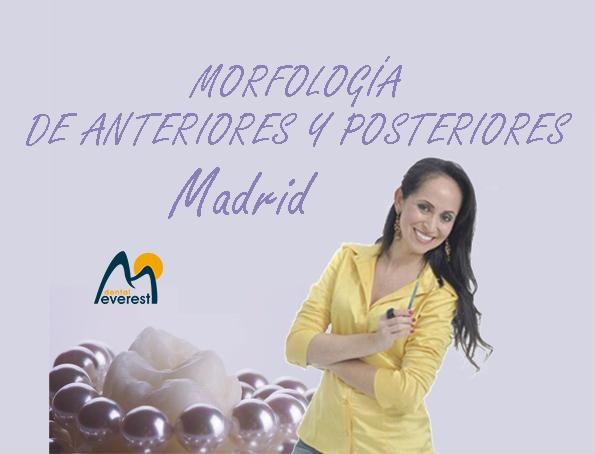 MORFOLOGÍA ANT. Y POST.