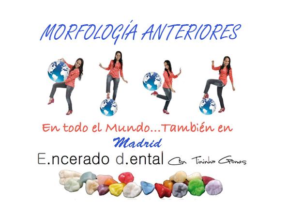 Morfología anteriores